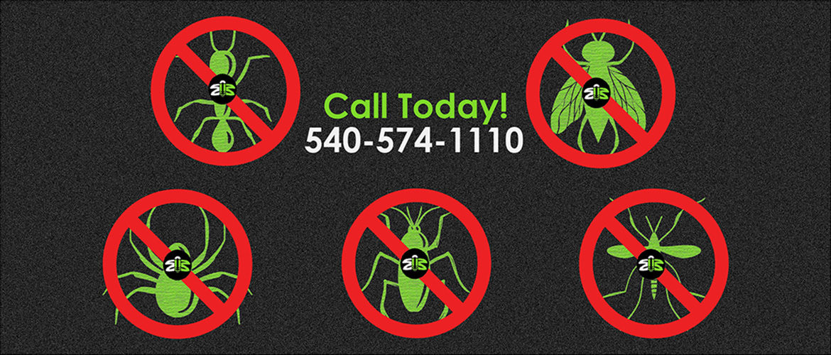 No bugs - Call Today 540-574-1110