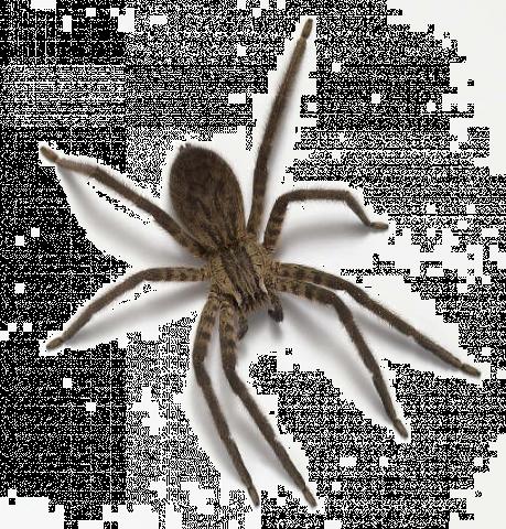 spiders myuglybug